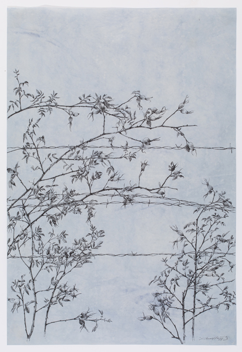 """Rosehip Fence , sumi ink on Japanese paper, 37 x 25"""", 2017"""