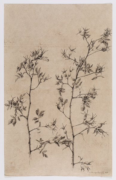 """Rosehips II , sumi ink on walnut dyed paper, 25 x 16"""", 2017"""