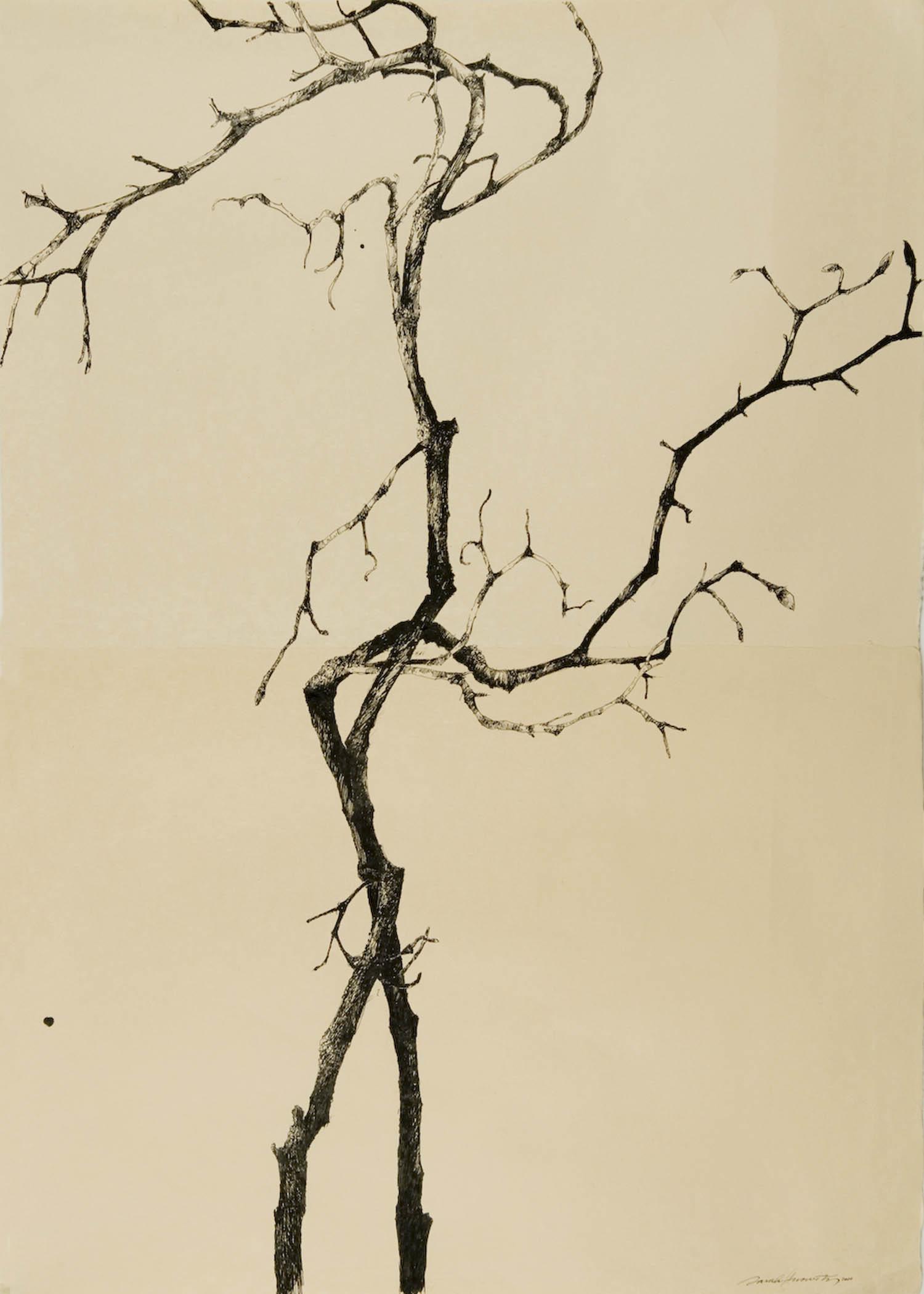 Magnolia Torinoko I.jpg