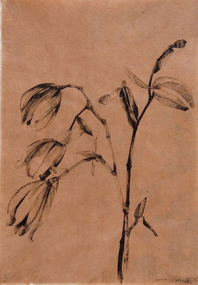 Spoon Magnolia II.jpg