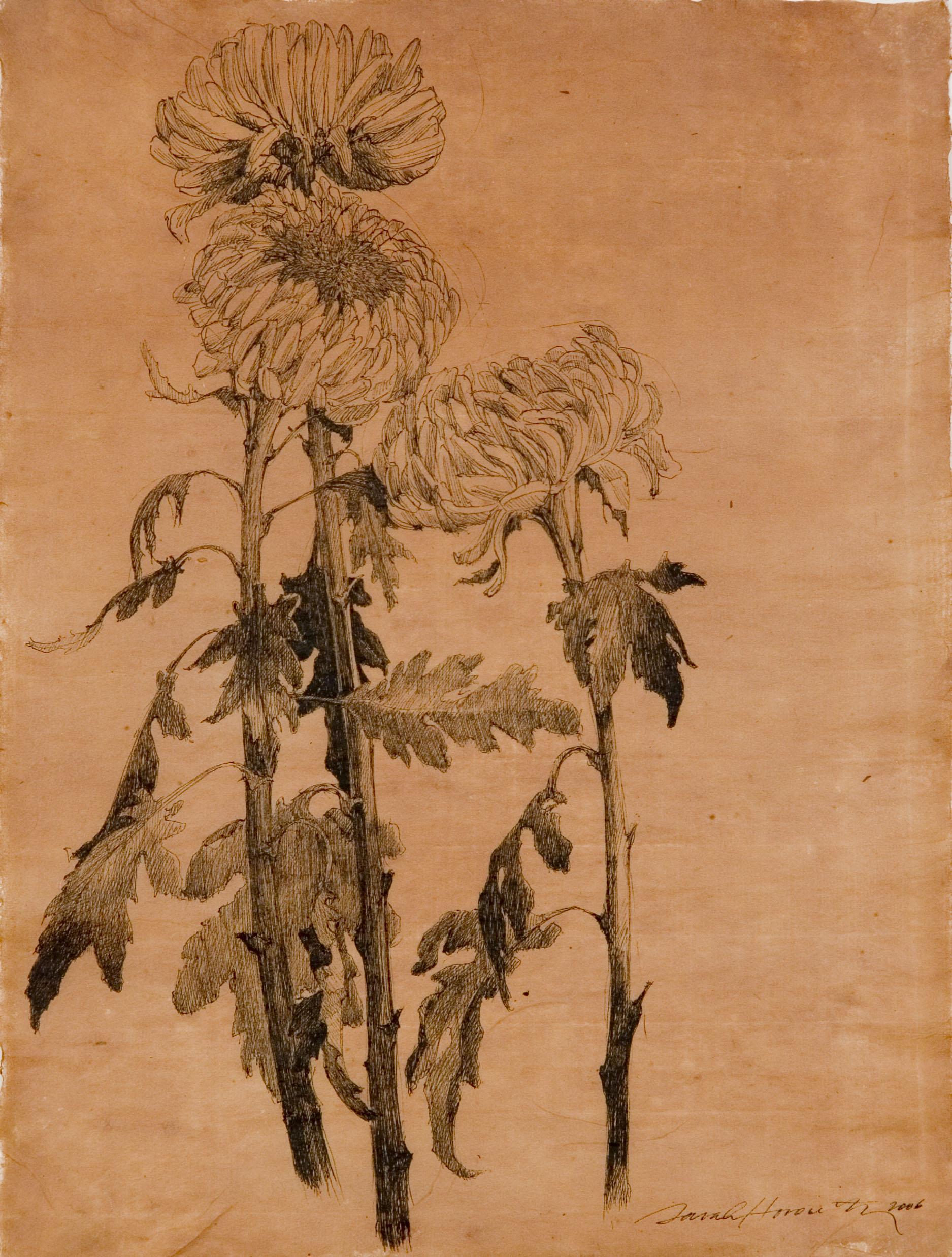 Chrysthansthemum IV.jpg