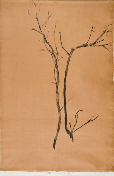 Catalpa Ink Branches_1.jpg