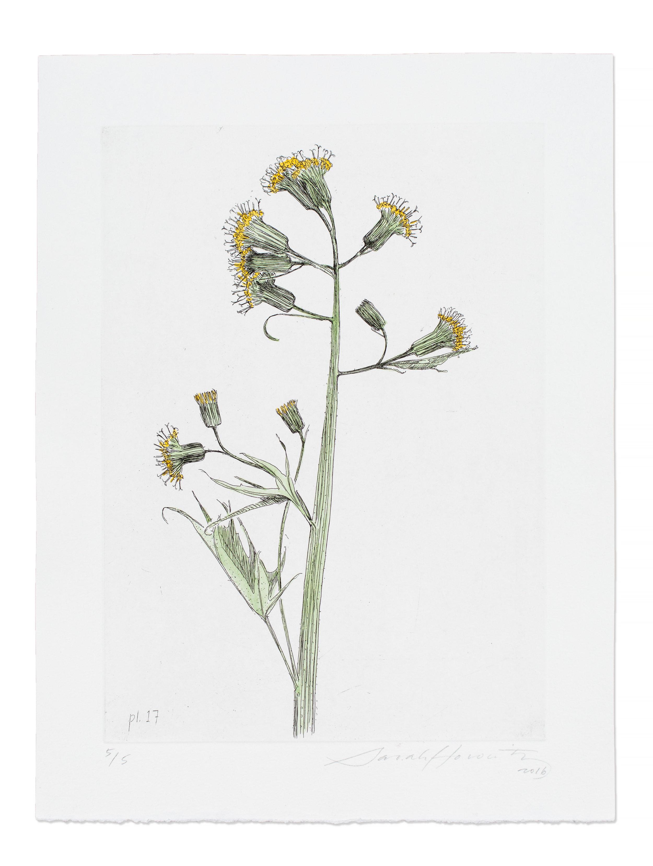Wildflower Etchings