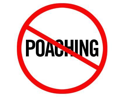 Say No to poaching.jpg