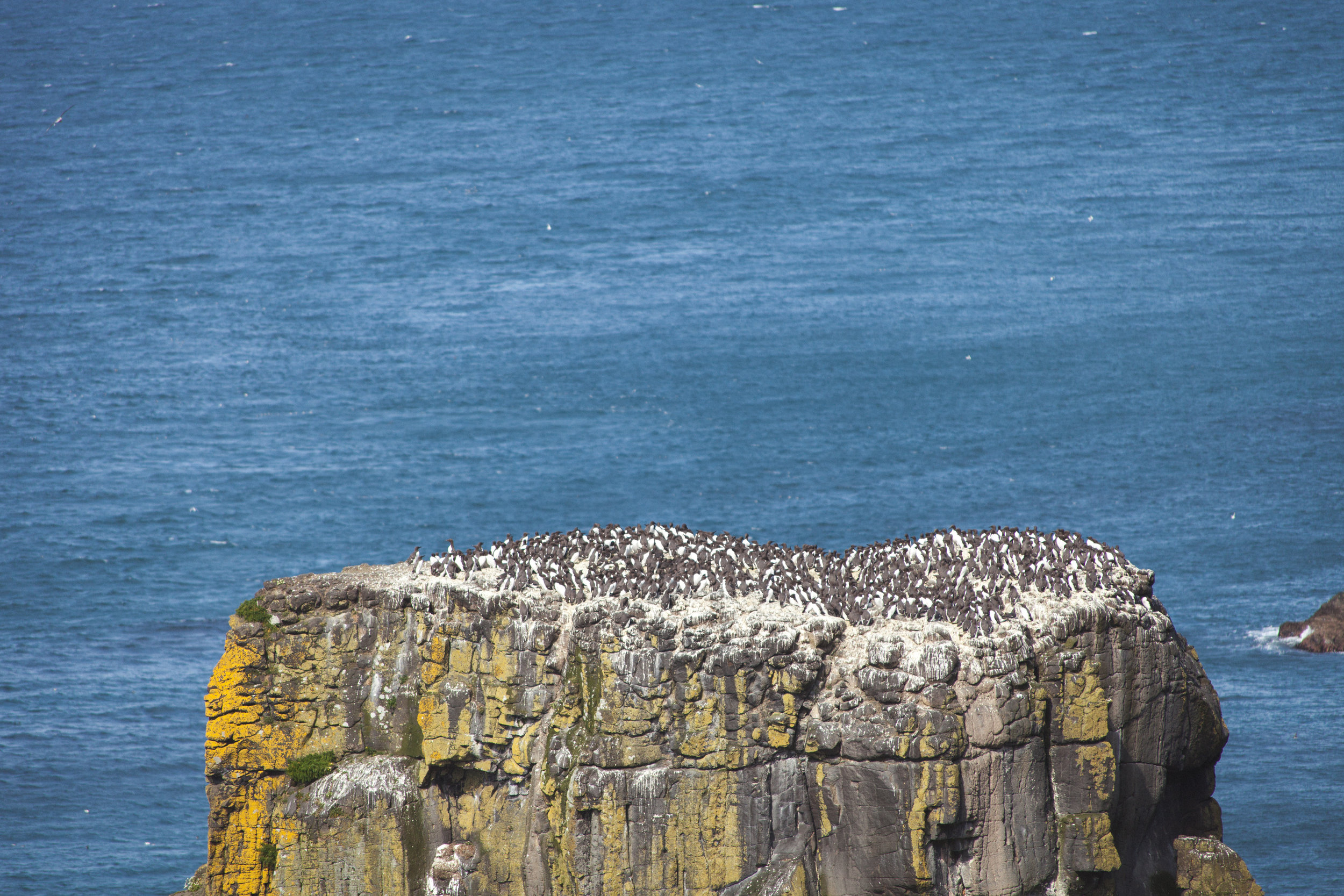 West_Lighthouse_Rathlin_036.jpg