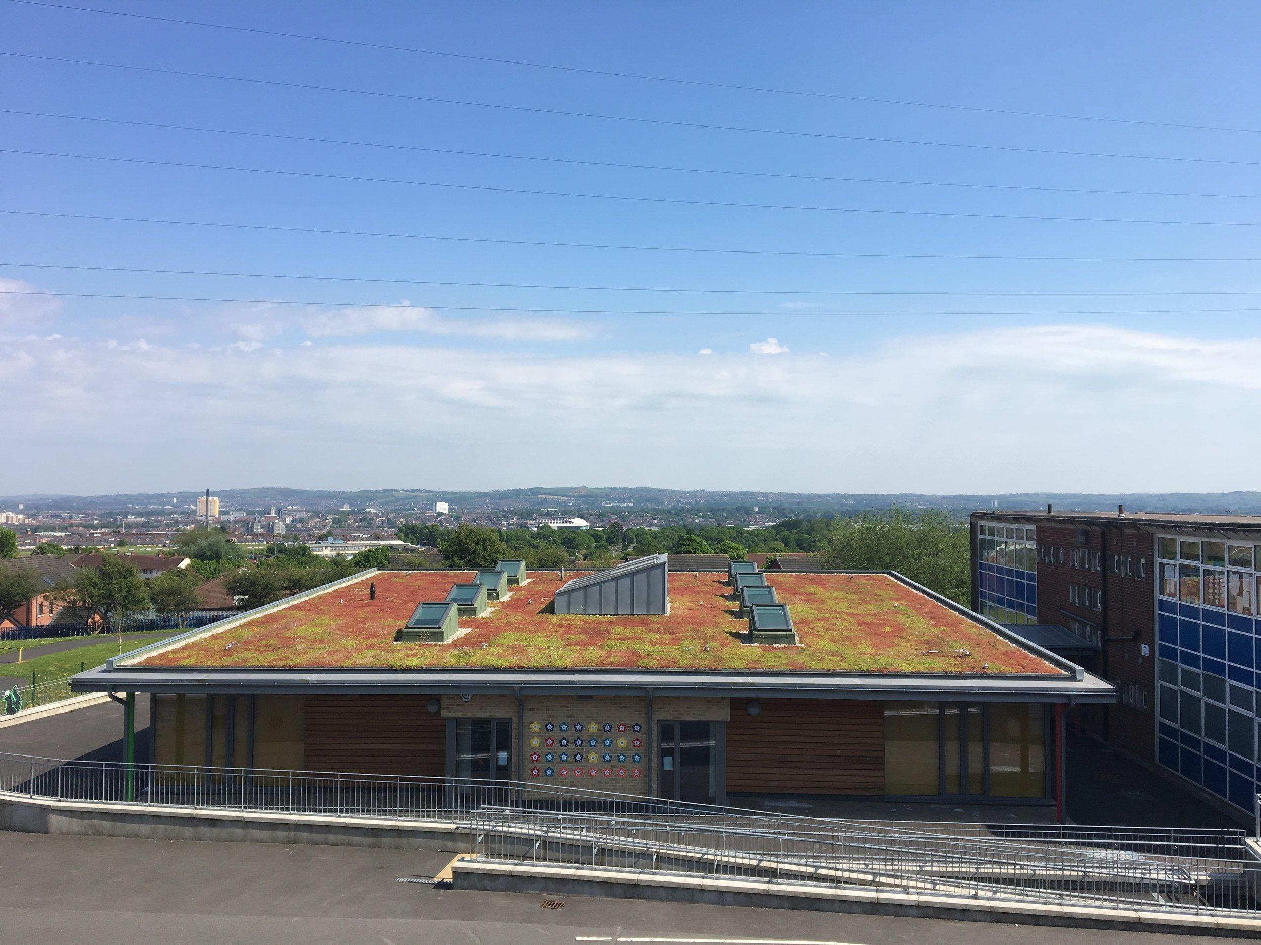 0 Sedum Green Roof.JPG