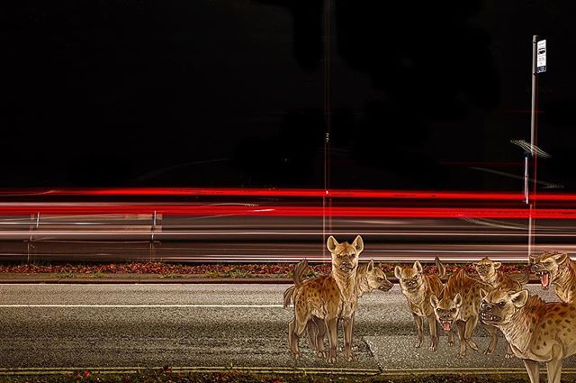 Urban jungle No.2 #urbanjungle #hyena #hyenas #pack #hunting #night #longexposure #lightrails #bristol #art #streetart #streetphotography #moffink #moff #watchthisspace
