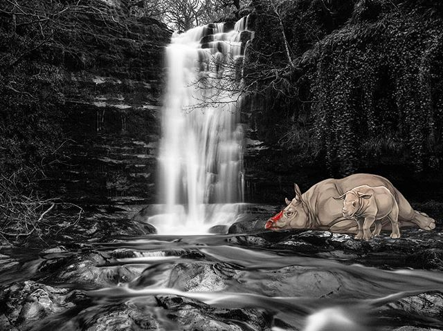 We always spoil what's beautiful.. #moffink #moff #waterfall #rhino #rhinohorn #poaching #endangeredspecies #inkjet #beauty #death #rhino @wwf #art #photoart #photography #photograffiti #bristol #bristolgraffiti #watchthisspace