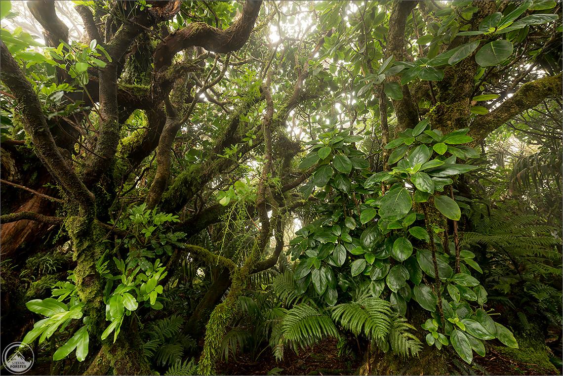 März 17 - Lord Howe Island
