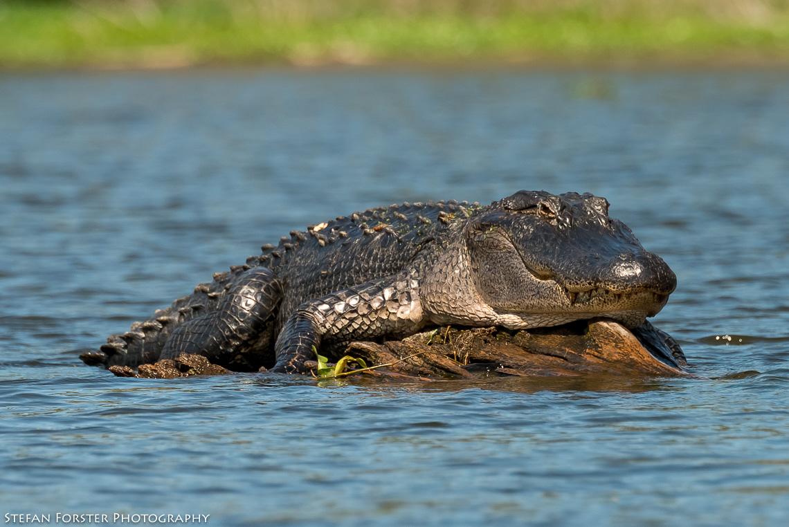 Swamps-5.jpg