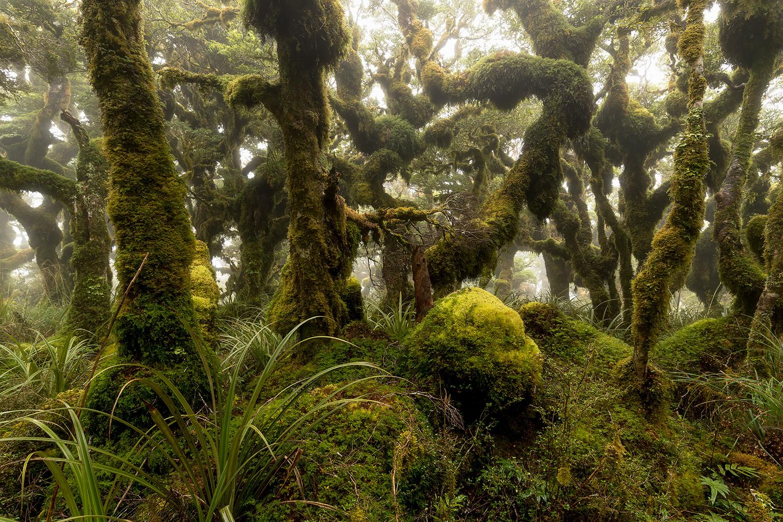 ....  Neuseeland Nordinsel  ..  New Zealand North Islands  ....