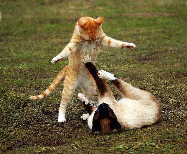 Fight Fight Fight!