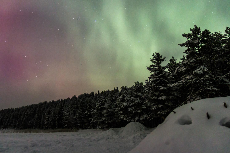 Aurora over winter forest