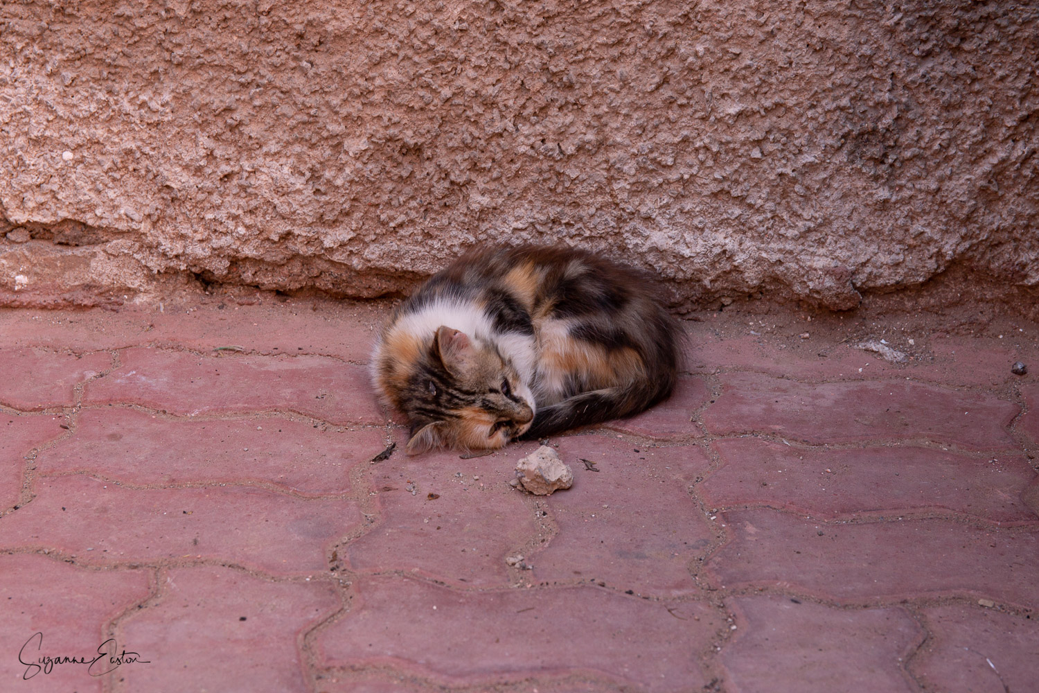 A tiny kitten and his rock asleep in a side street of the Kasbah in Marrakech