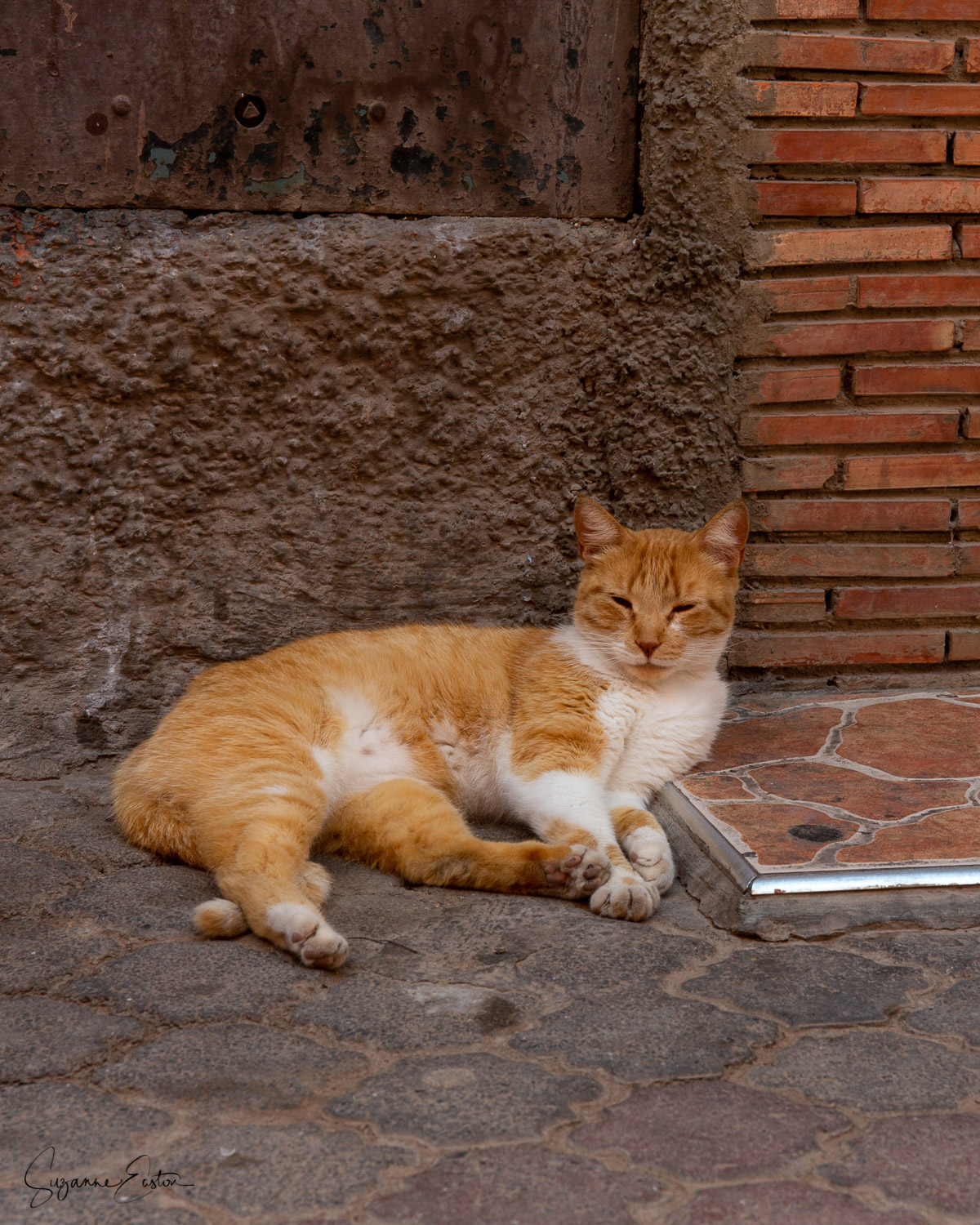 A fine wild cat in an alleyway of Marrakech