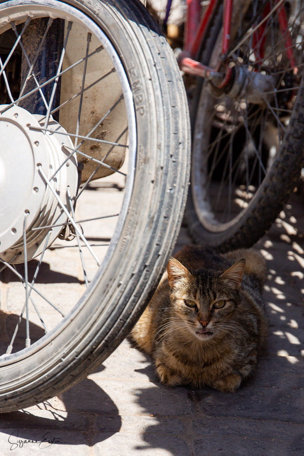 Hiding from the midday sun this tabby cat has found her spot in the motorbike repair shop.