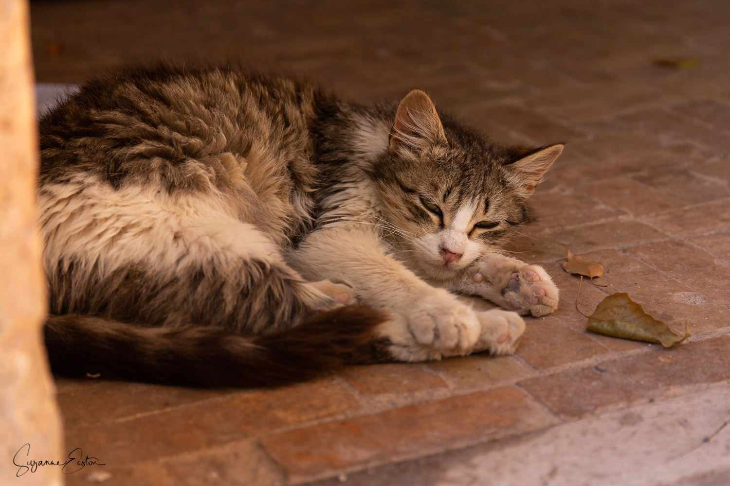 This tabby cat was snoozing contently in the grounds of the mosque in Marrakech. Food nearby and no scooters or vehicles to disturb his day.