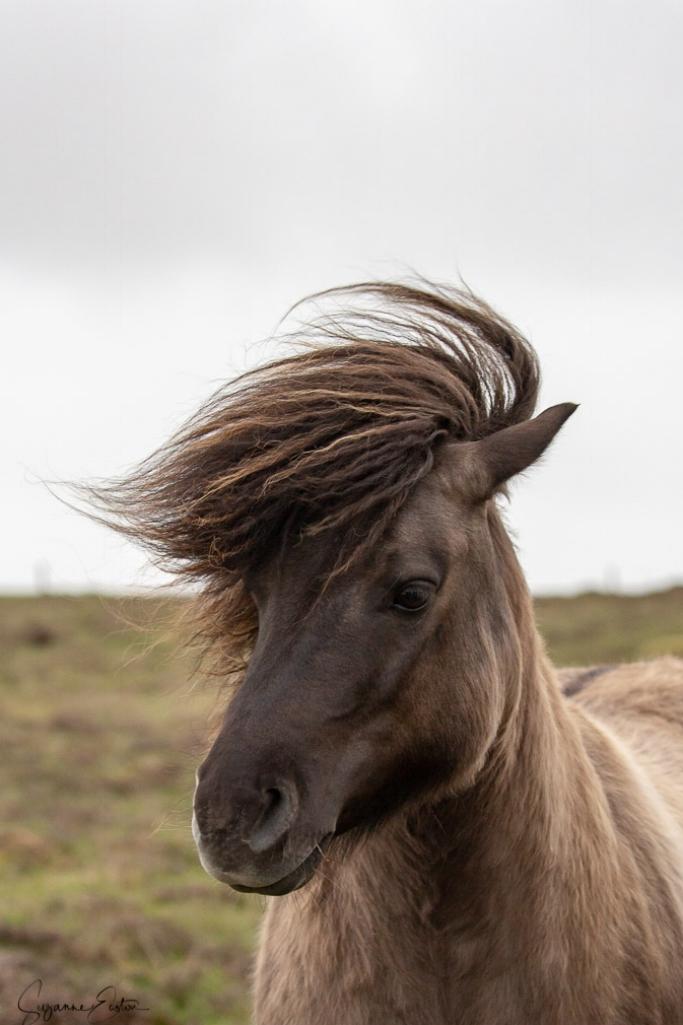 pony hair-5.jpg