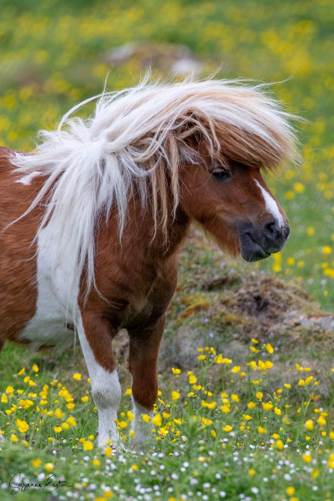 pony hair-9.jpg