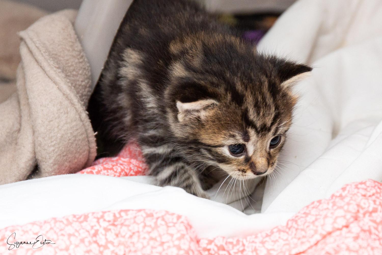 kitten-2.jpg
