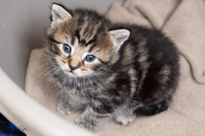 kitten-3.jpg