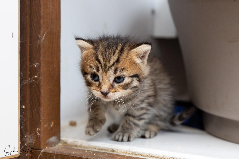 kitten-4.jpg