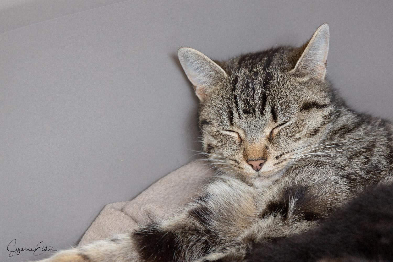 kitten-6.jpg