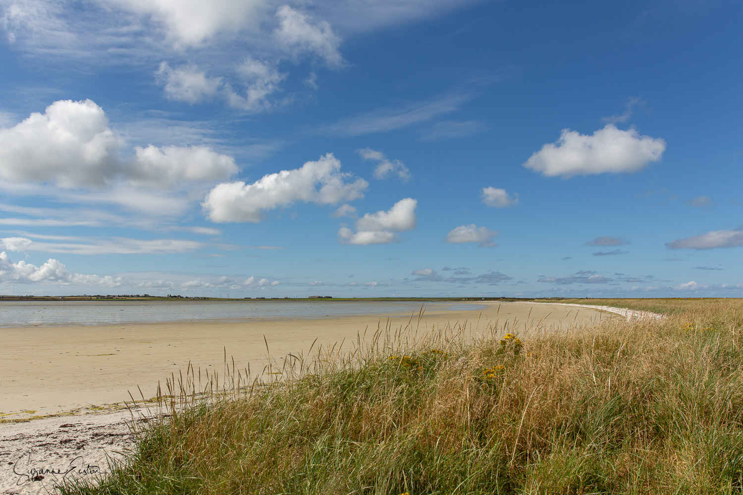 Cata sand is home to waders on the Orkney island of Sanday
