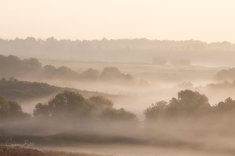 new forest sunrise-2.jpg