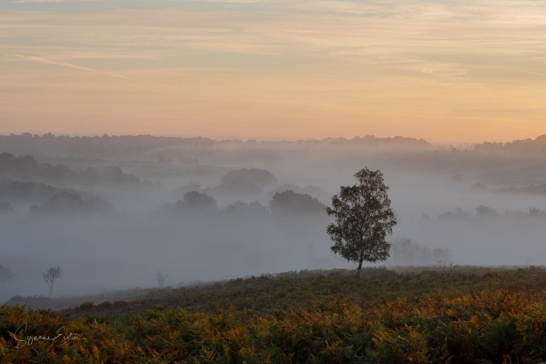 new forest sunrise.jpg