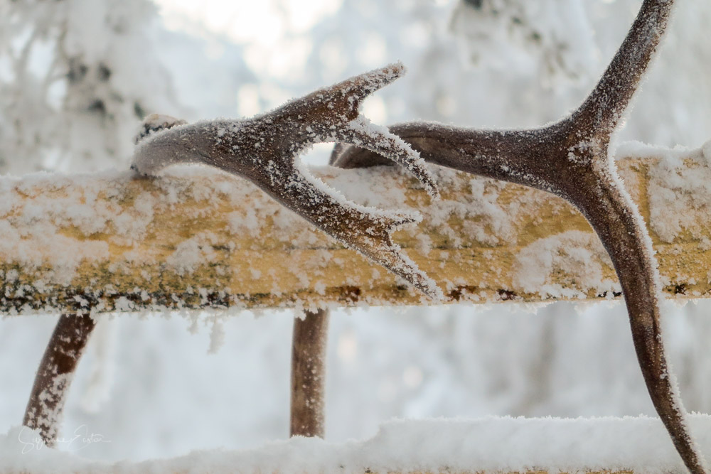Frozen antlers