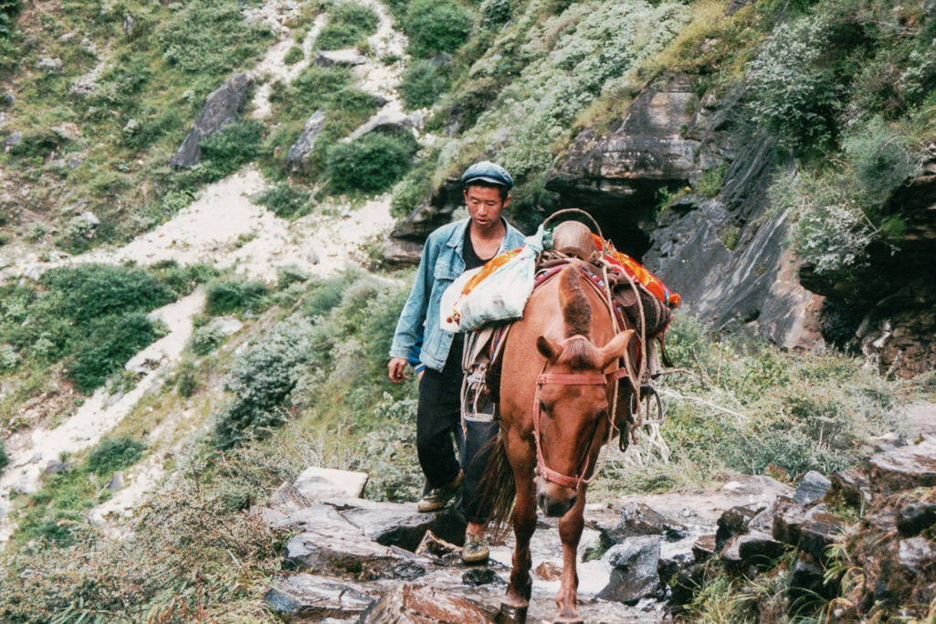 Pack horse in China