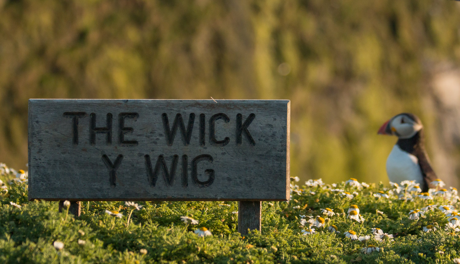 The Wick where the puffins live on Skomer Island