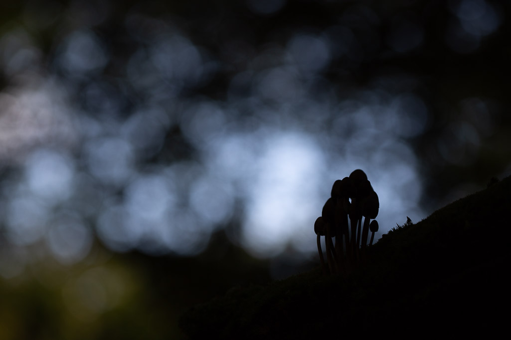 Bokeh and mushrooms
