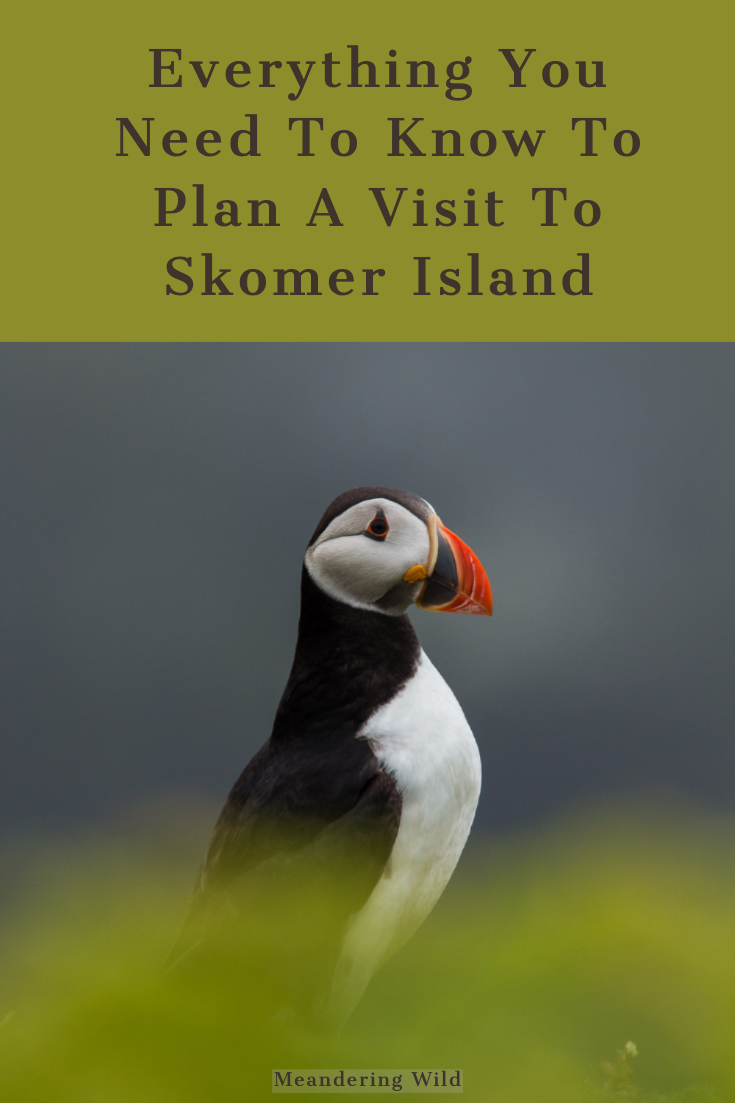 Skomer Island is located off the south west Wales coast in Pembrokeshire. In the summer months it is home to thousands of seabirds including puffins. A trip to see these sea birds needs planning to get the most from the day.