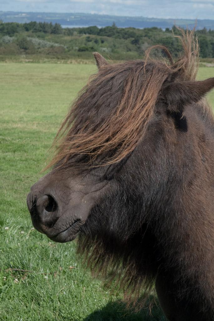 Pony mane