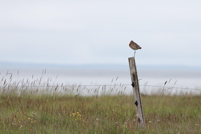 Bird on a post