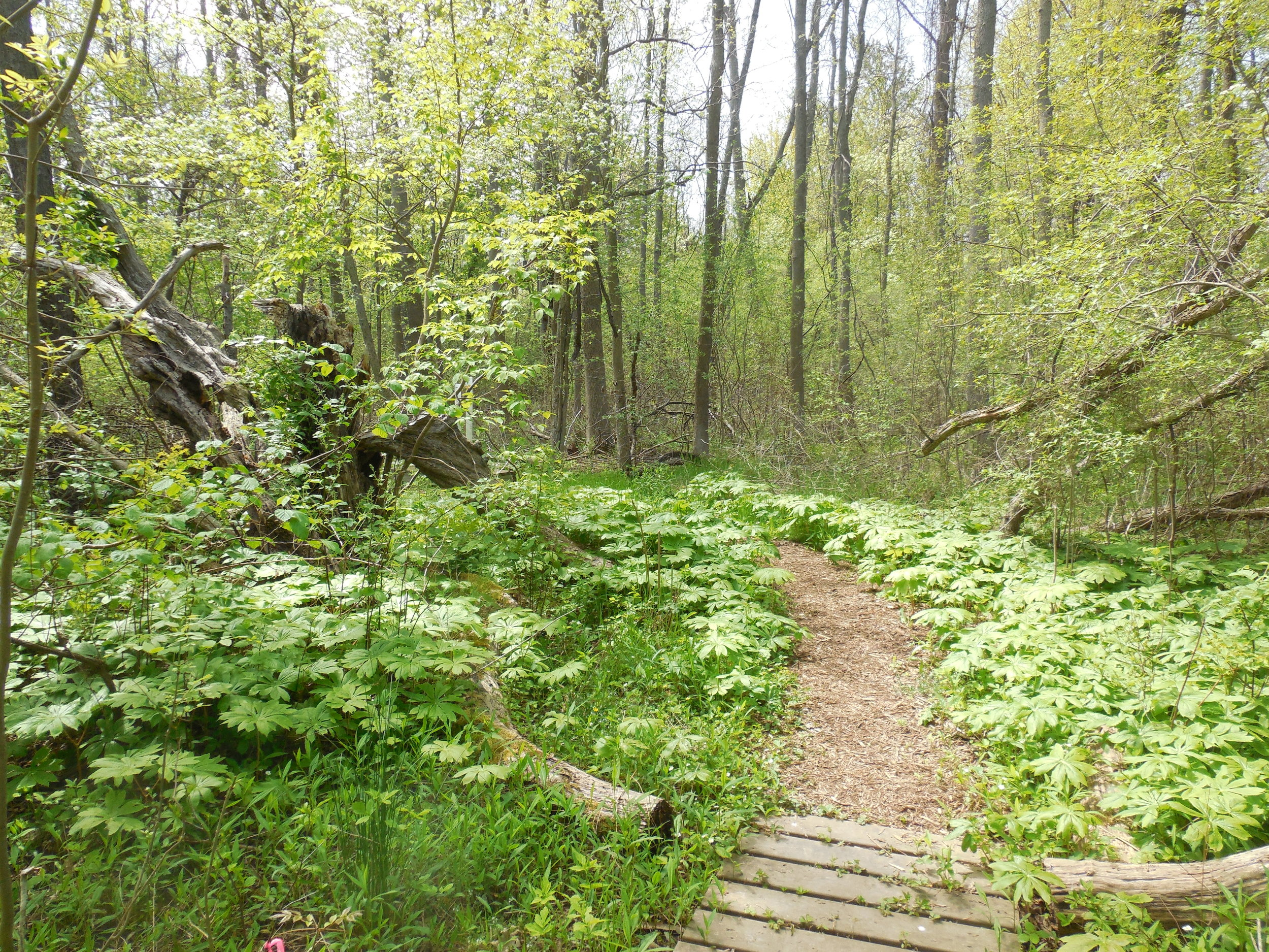 Island Cottage Woods Preserve -