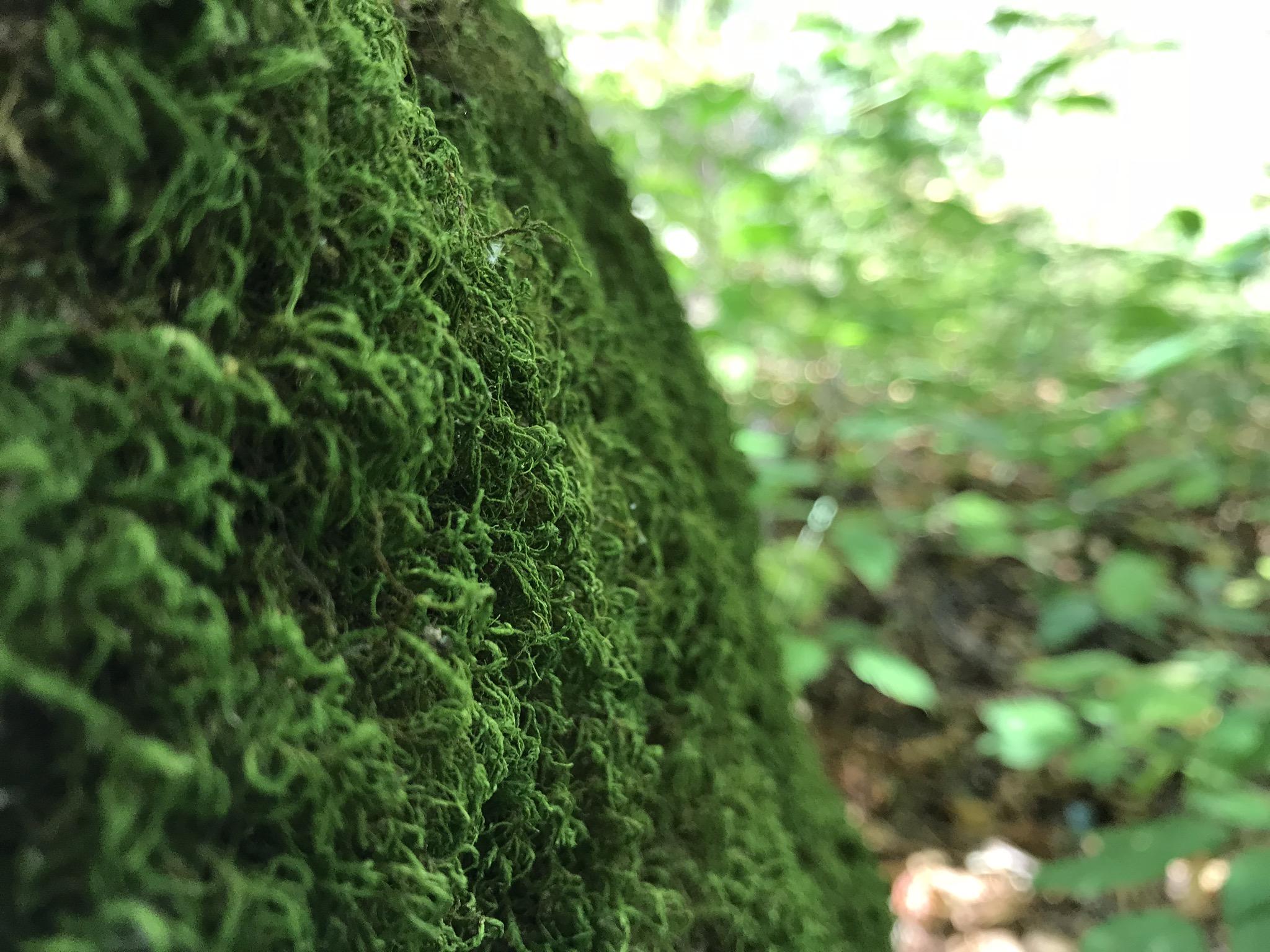 gosnell big woods preserve -