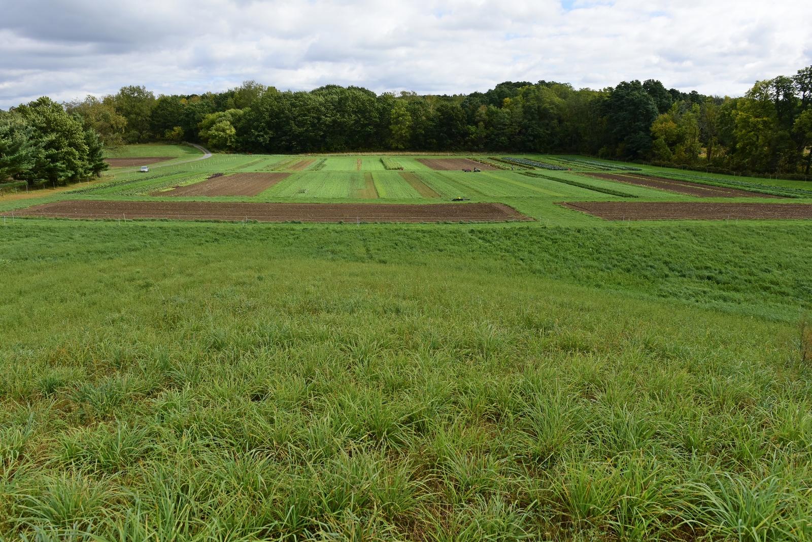 farm -
