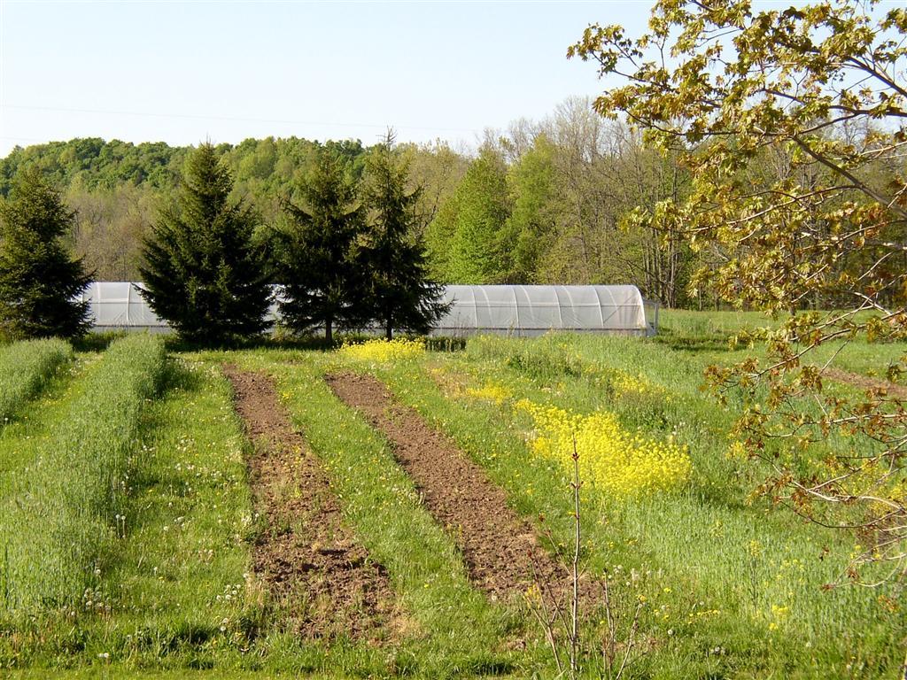 farm 3.JPG