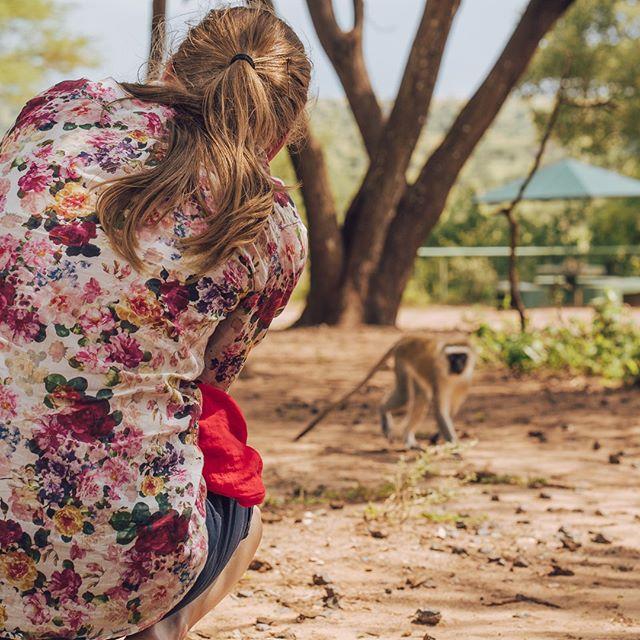 Semestertid ännu? Du sparar väl lite semesterdagar till hösten? Kanske för ett safariäventyr med oss där du kan träffa allt från småapor till ståtliga lejon i det vilda 🌴🐵🦁 . ..#tanzania #zanzibar #arusha #kilimanjaro #safari #exotictravel #masaimara #tarangire #ngorongoro #stonetown #pool #sunshine #monkeybusiness #naturesafari #wildlife #naturelover
