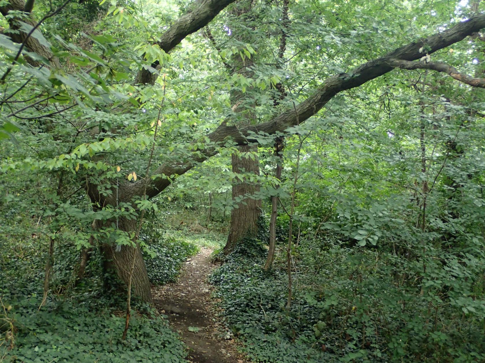 New Cross Cutting woodland.jpg