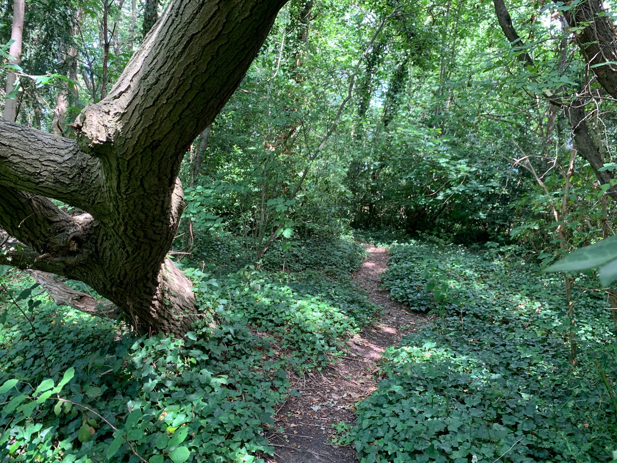 A New Nature Reserve for South East London. -