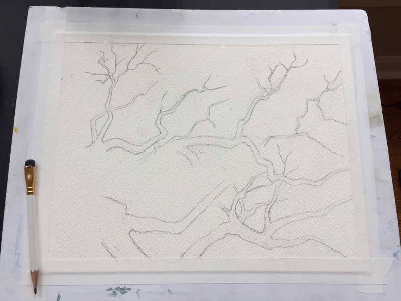BranchesSketch2.jpg