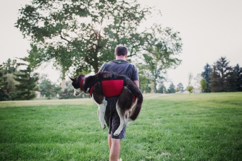 THREE-POINT ADJUSTABLE CHEST AND REAR SUPPORT FITS DOG SNUGLY AND SAFELY WHILE EASING BACK STRAIN FOR ERGONOMIC CARRYING.