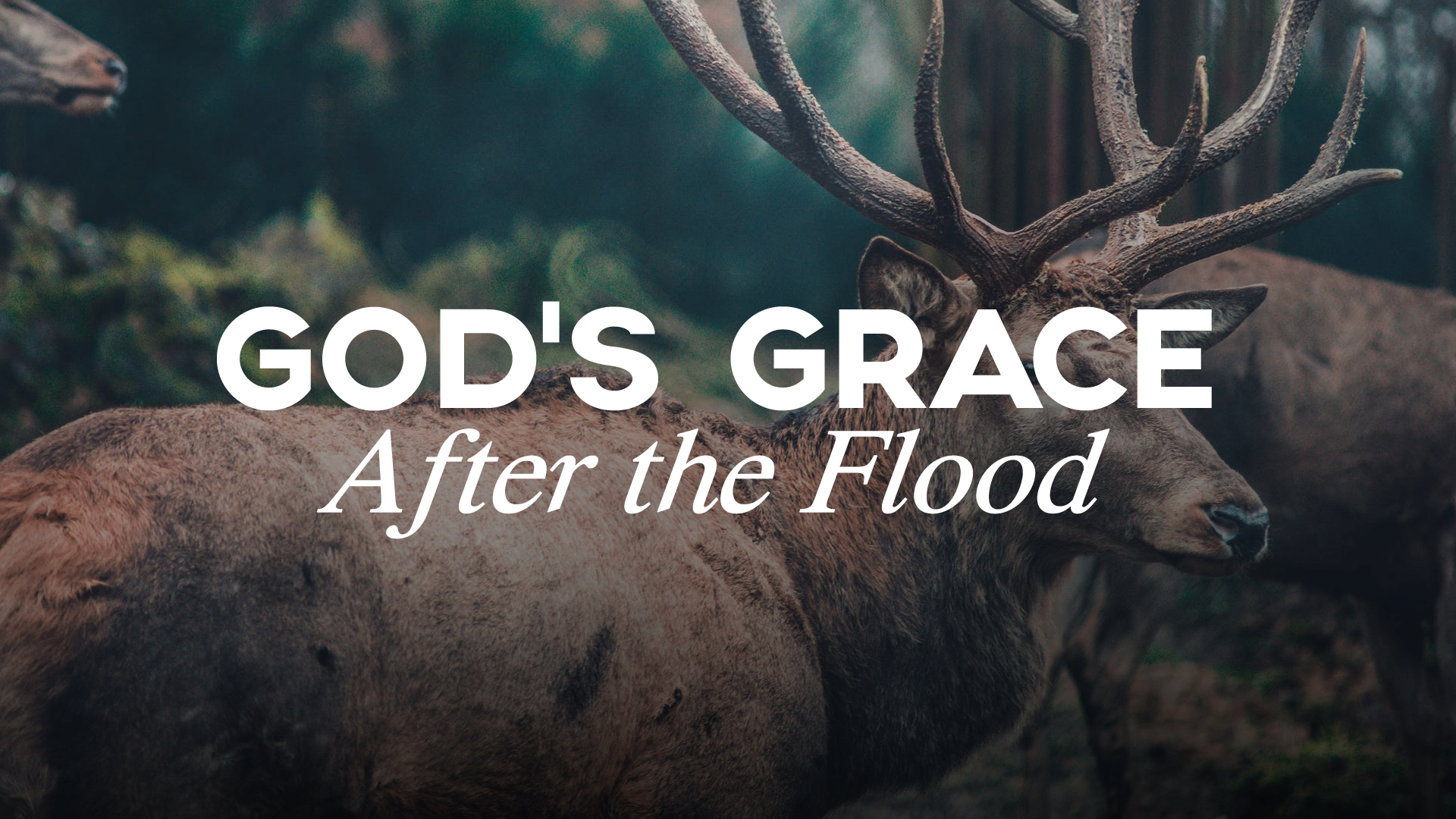 God's Grace After the Flood.jpg