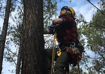 Envalish sent nationally certified arborist Randy Pound to measure and evaluate the trees that could become part of the course.