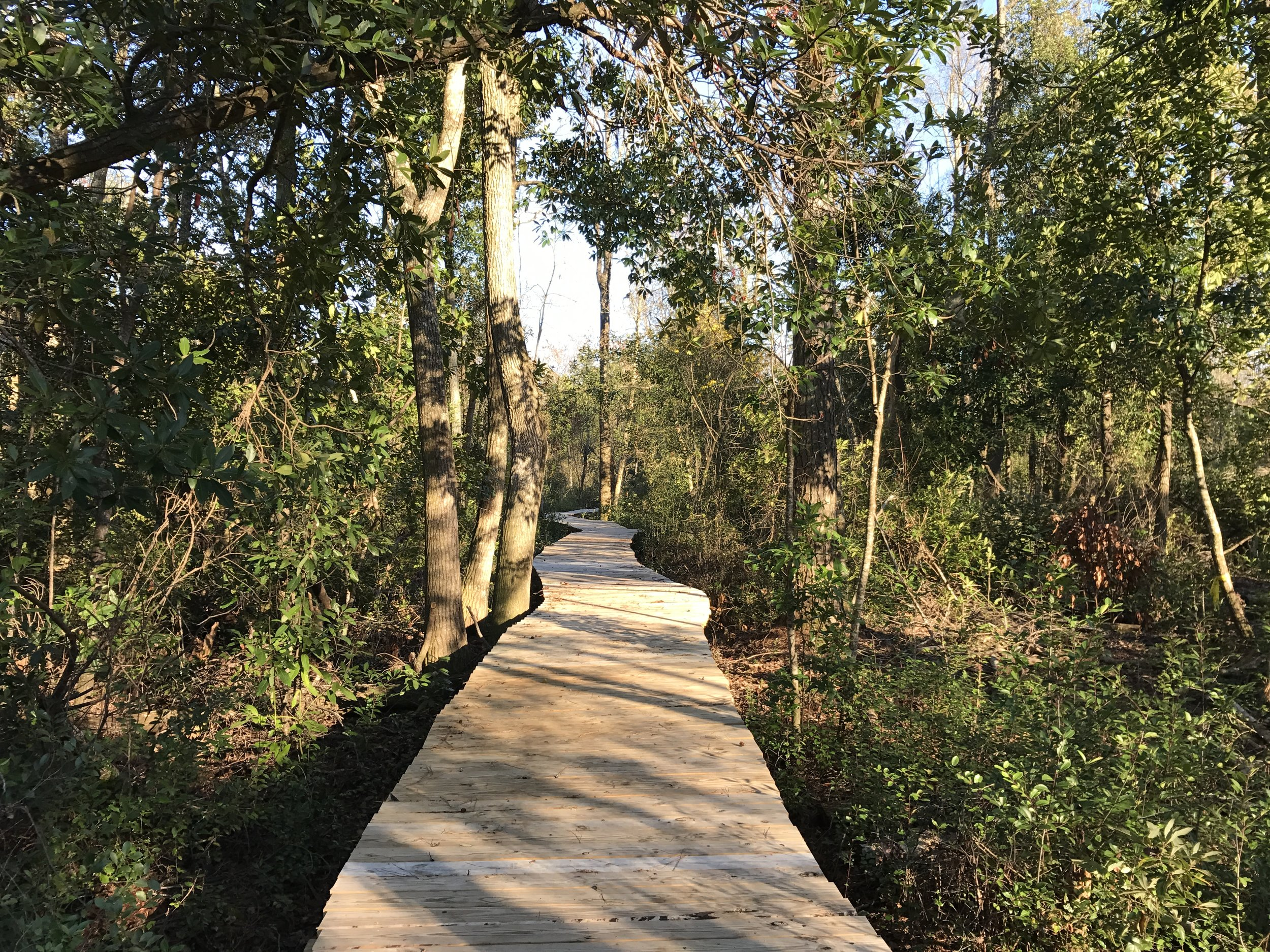 Lake Waccamaw State Park Connector Trail