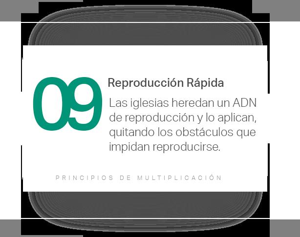 Red Nueva Vida Principios 09